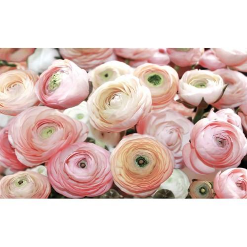 Bujori roz - fototapet