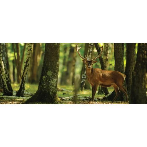 Fototapet cerbul din pădure