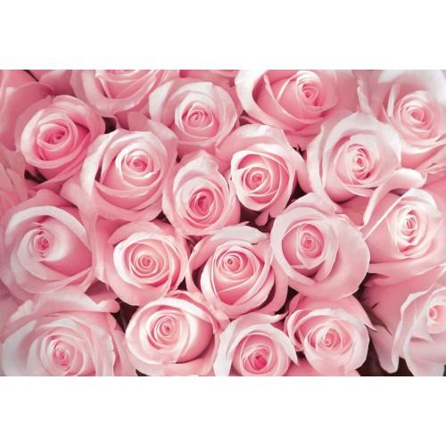 Oaza de trandafirii roz - fototapet