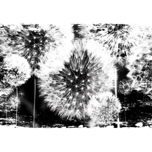 Papadii alb-negru - fototapet