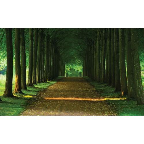 Poteca printre copaci - fototapet