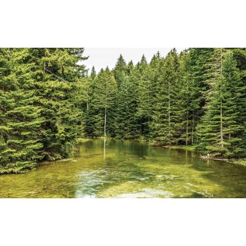 Râul din pădure - fototapet vlies