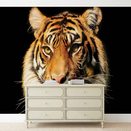 Tigrul - fototapet animale