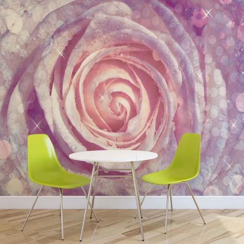 Trandafirul roz-purpuriu - fototapet
