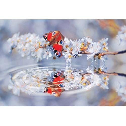Fluturi colorate - fototapet
