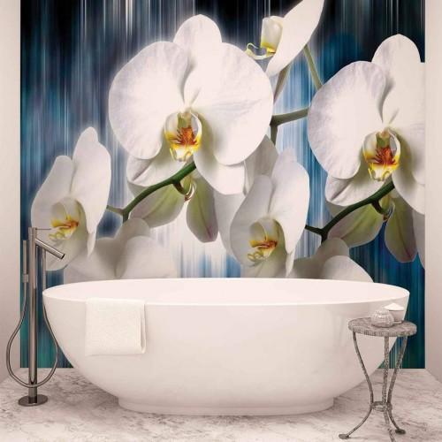 Orhidee albe pe fundal albastru - fototapet