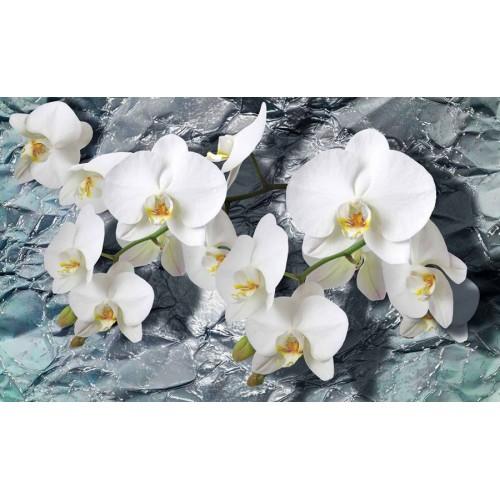 Orhidee albe - fototapet