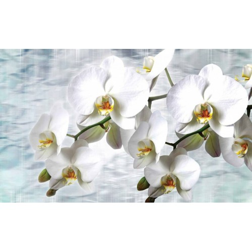 Orhidee albe in stil clasic - fototapet