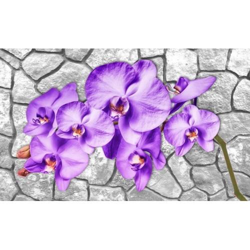 Orhidee mov - fototapet