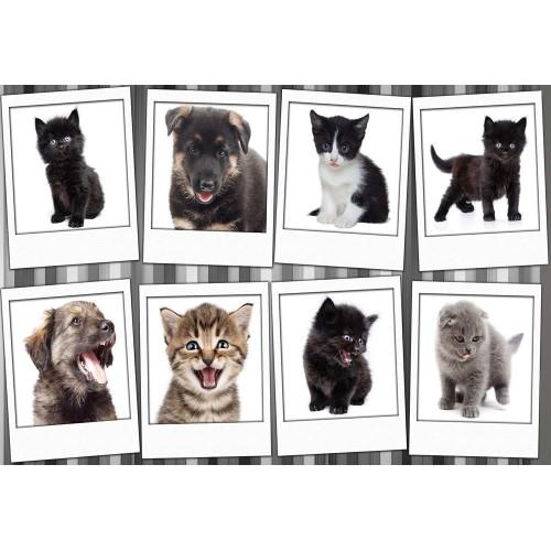 Câini și pisici - fototapet