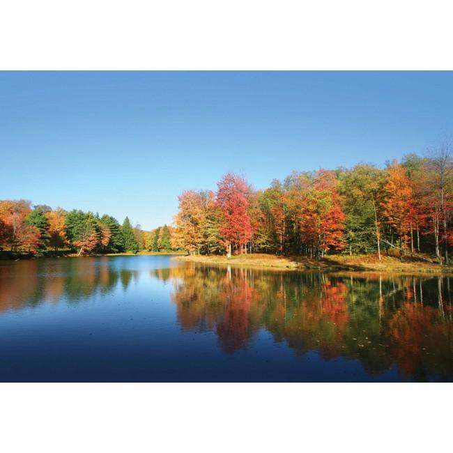 Lacul și pădurea - fototapet