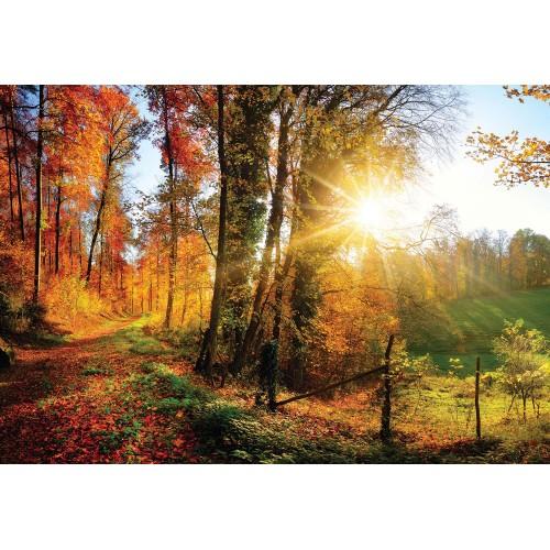 Răsărit de soare în pădure - fototapet