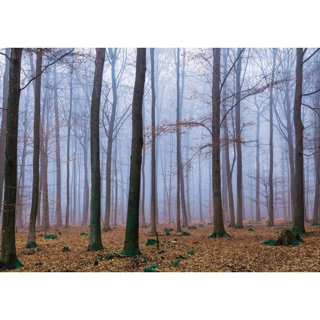 Copacii din padure I - fototapet