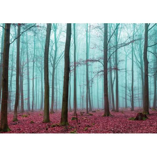 Copacii din padure II - fototapet