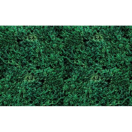 Textura de iarba - fototapet