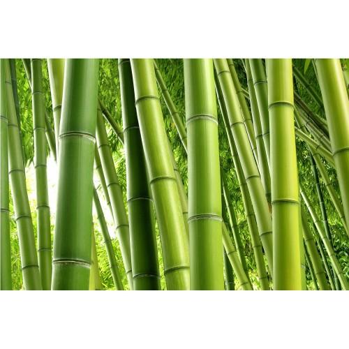 Bamboo - fototapet vlies