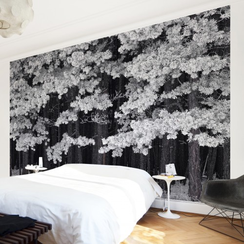 Bruma. Padure in Austria - fototapet vlies