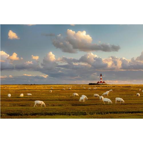 Farul din Marea Nordului - fototapet far și animale