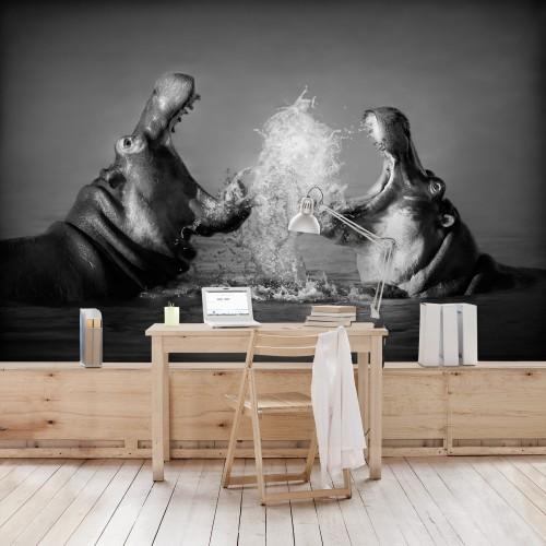 Lupta hipopotamilor - fototapet animale