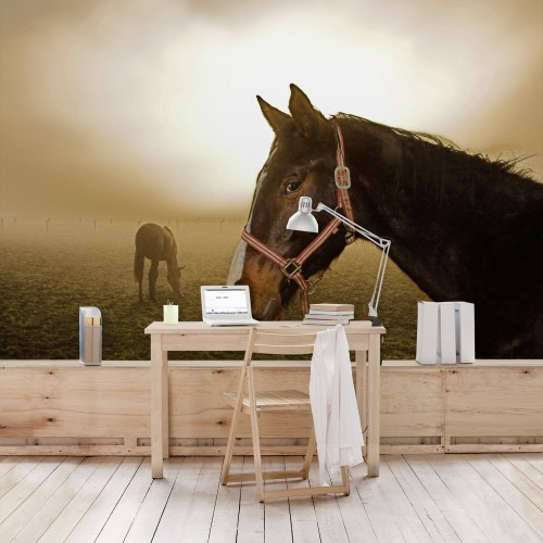 Manzul si iapa - fototapet cu cai