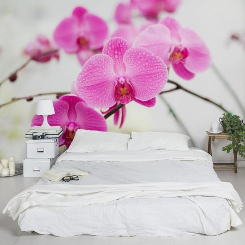 Orhidee in detaliu - fototapet vlies