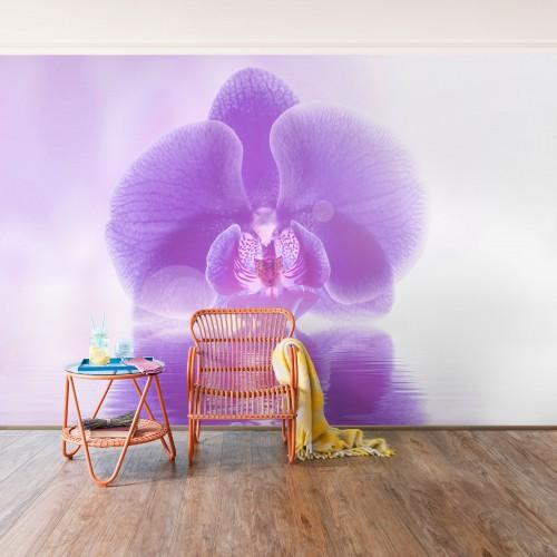 Orhideea violet pe apa - fototapet vlies