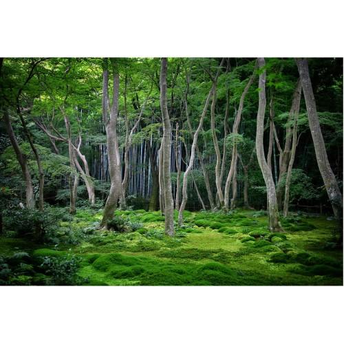 Padurea japoneza - fototapet vlies