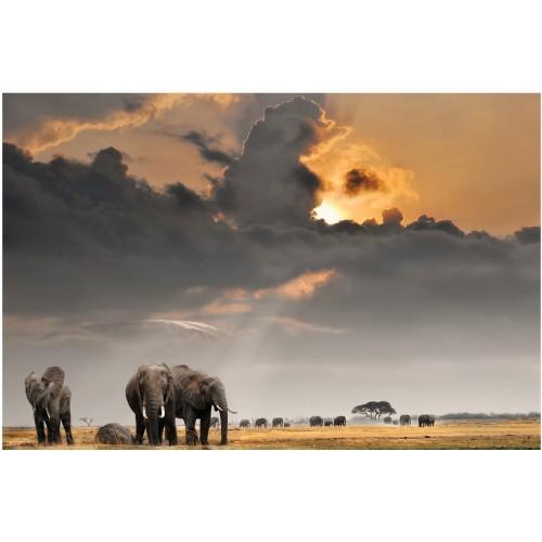 Savana elefantului - fototapet animale