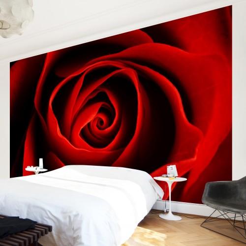 Trandafir rosu aprins - fototapet vlies