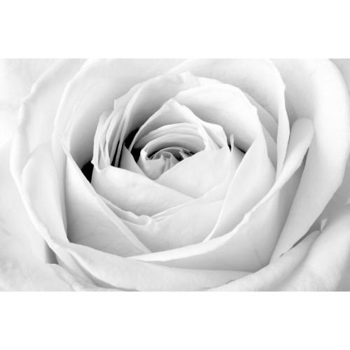 Trandafirul alb - fototapet vlies