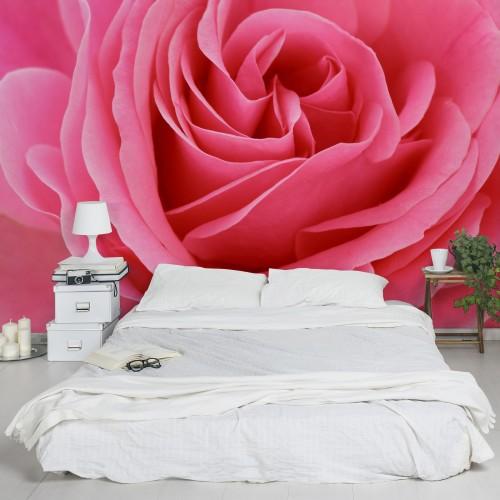 Trandafirul roz - fototapet vlies