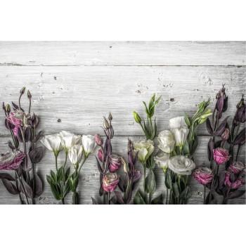 Tulpini de trandafir in stil shabby - fototapet vlies