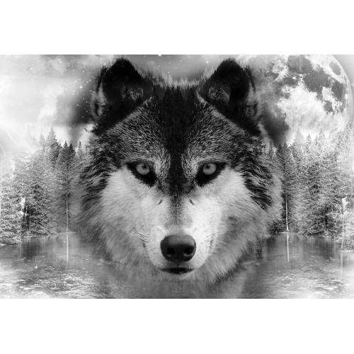 Lupul din pădure - fototapet animale