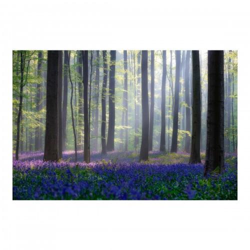 O zi de primăvară în pădure - fototapet vlies