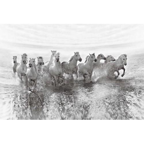 Fototapet Cai albi alergând pe malul mării