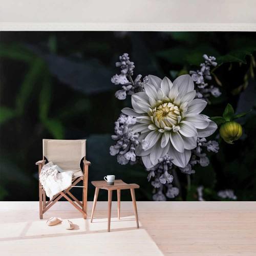 Dahlia albă - fototapet vlies
