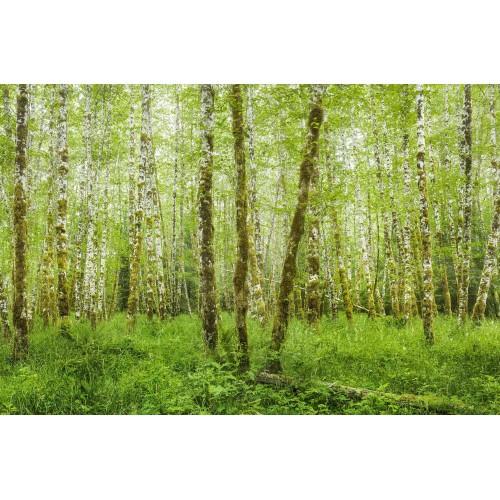 Parcului Național Olimpic și Pădurea Hoh Rain - fototapet vlies