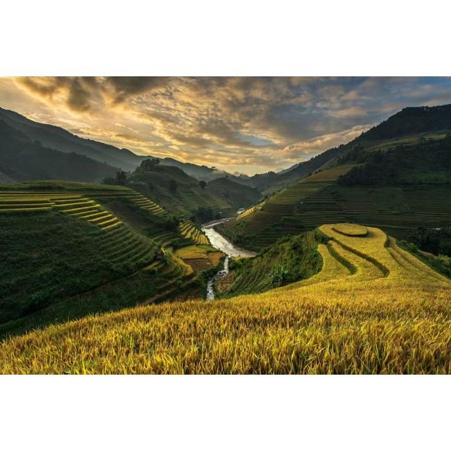 Plantații de orez din Vietnam - fototapet vlies