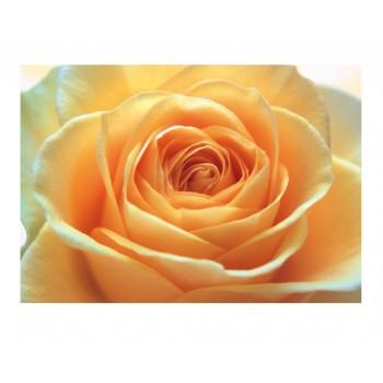 Fototapet floral Trandafir romantic