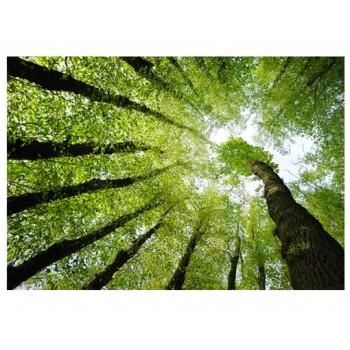 Fototapet peisaj Pădurea 24345