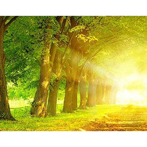 Fototapet Toamna in pădure - No.199