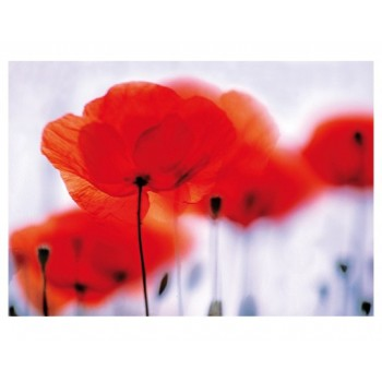 Fototapet floral Câmp de maci