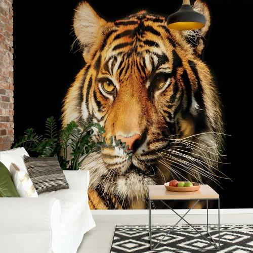 Fototapet Animale Tigrul - 1964P8