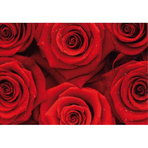 Fototapet floral Trandafiri roșii No.37