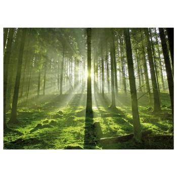 Fototapet peisaj Pădurea fermecată
