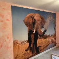 Fototapet: Elefant