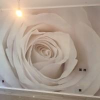 Fototapet: Trandafir alb