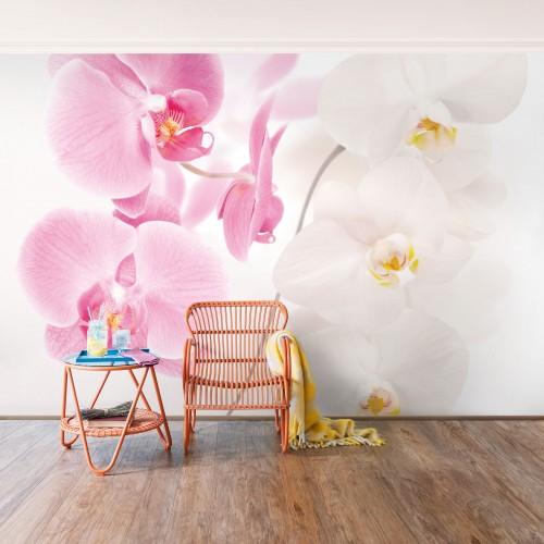 Orhidee delicata - fototapet vlies