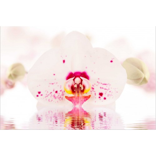 Orhidee pe apă - fototapet vlies