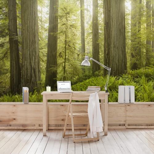 Padurea din Redwood - fototapet vlies